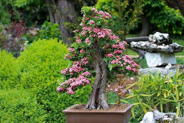 Morikami Museum and Japanese Gardens: A Dose of Zen Near Aura Boca
