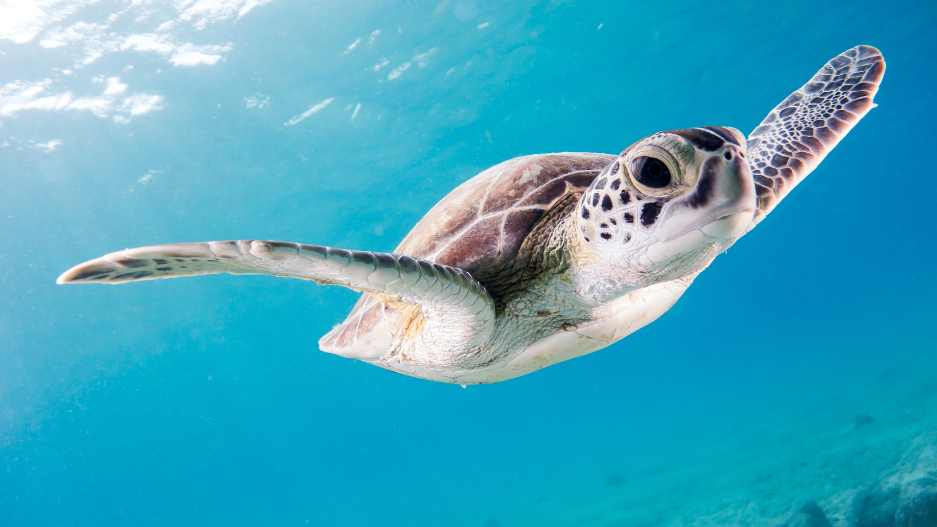 Gumbo Limbo Nature Center: A Must-Visit Attraction for Animal Lovers