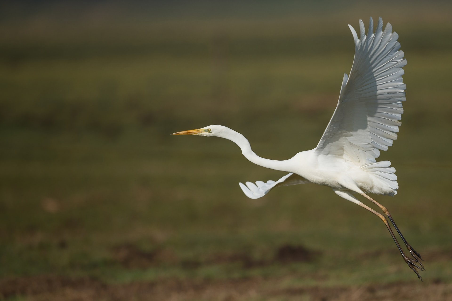 Keep Your Eyes Peeled for Local Wildlife at Wakodahatchee Wetlands