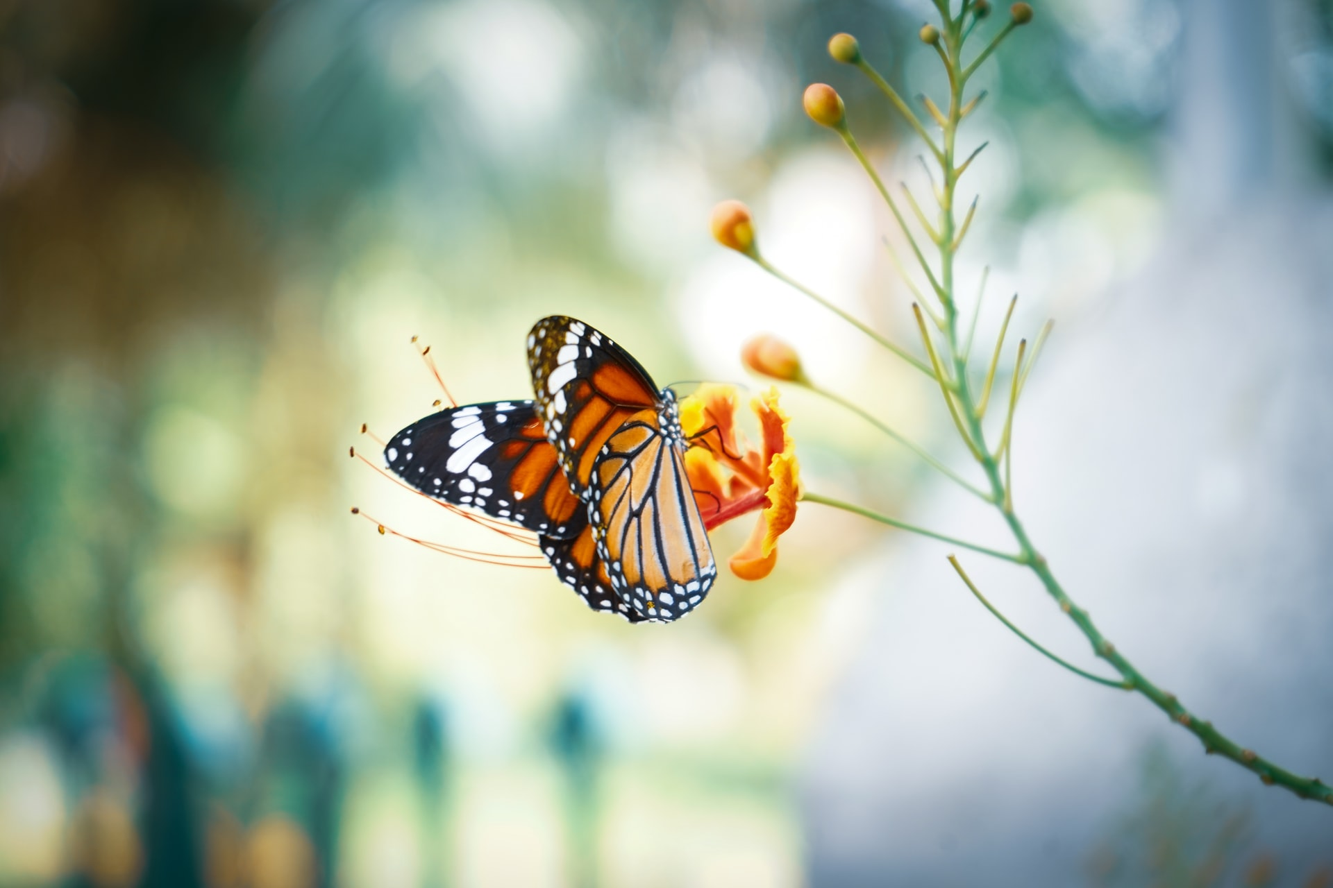 Butterfly World: Home to More Than 20,000 Fluttery Friends
