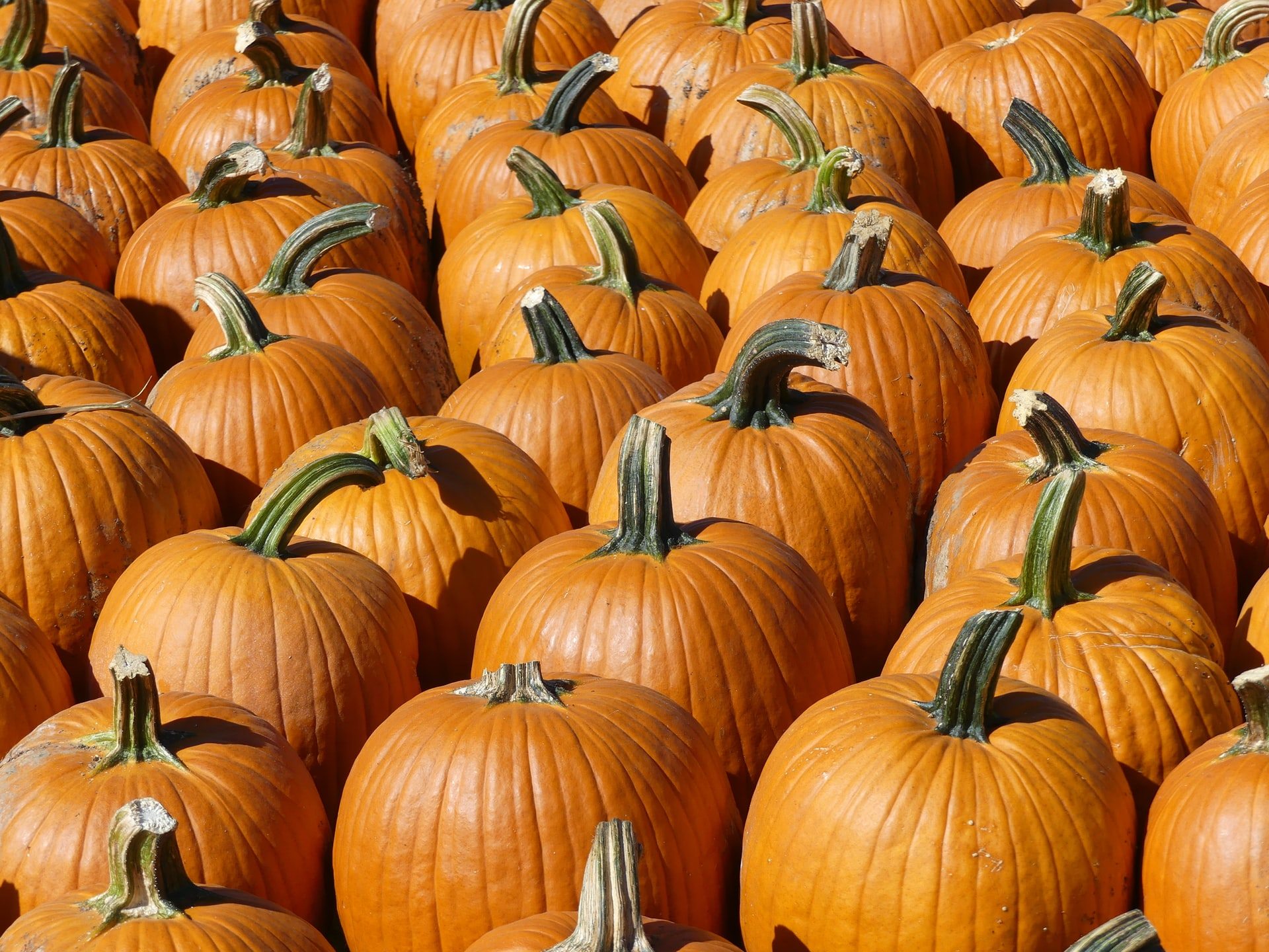 Save the Date for the Boca Raton Pumpkin Patch Festival